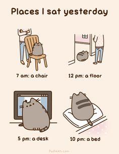 Warum Katzen die Herrscher des Internets sind  Obwohl sie mitunter zweifelhafte Positionen einnehmen.