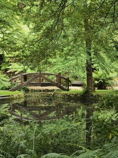 Alfred Nicholas Gardens, Dandenong Ranges National Park, Victoria, Australia