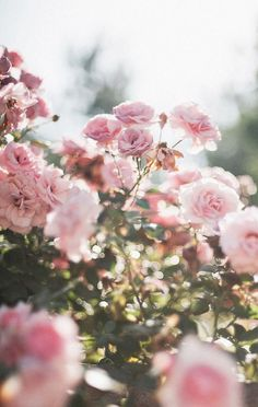 Best Ideas for wallpaper pink flowers floral Pink Flowers, Beautiful Flowers, Flowers Nature, Pink Nature, Colorful Roses, Pink Butterfly, Beautiful Butterflies, Beautiful Images, Bouquet