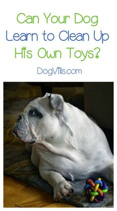 Can a dog be taught to clean up his toys? Like all things with pups, it depends on YOU! Check out our dog training tips to get Fido to clean up after himself!