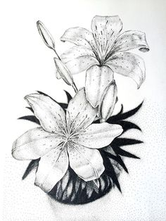 Flowers sketch drawing pencil 49 new ideas Lilly Flower Drawing, Flower Drawing Images, Flower Sketch Pencil, Lilies Drawing, Flower Sketches, Floral Drawing, Drawing Flowers, Beautiful Drawings, Cool Drawings