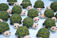 Turtle invasion!