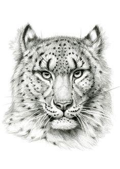 Snow leopard portrait by Svetlana Ledneva-Schukina.