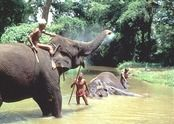 Elephants in Sri Lanka.  #VirtualTourist