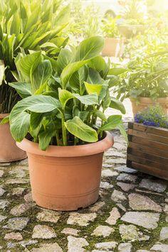 Exotic Plants In Their Own Garden #exotic #garden #plants #their