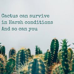 Peace And Kindness - With Love BITSY Peace And Harmony, Cactus Plants, Survival, Love, Quotes, Amor, Quotations, El Amor, Qoutes