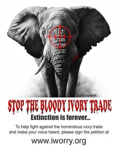 Ban All Ivory Trade
