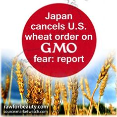 Japan cancels u.s. wheat order on gmo fear report | RAW FOR BEAUTY