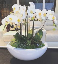 Orchid Terrarium Ideas Beautiful - Fresh orchid Terrarium Ideas Beautiful, orchid Succulent T Arrangement In Vintage Pot