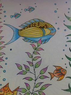 Peixinhos - Oceano Perdido