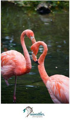 Pittsburgh Zoo - Heart Flamingos www.nicdreamcatcher.com ©Nicole Iagnemma