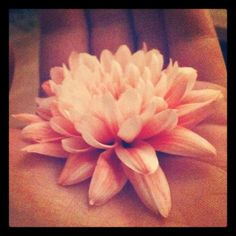 Blossom Pink Flower in Hands Lomo Original Small 4 X 4 inch Art print for the tranquil home. £6.00, via Etsy.