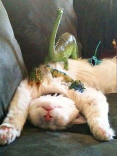 """Good to know I'm not the only one who plays """"Let's see how many _______ I can place on the cat before he wakes up."""""""