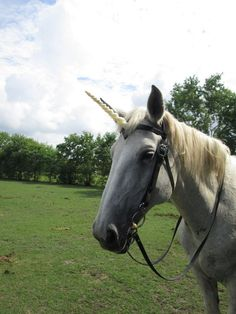 unicorn horn browband - Google Search