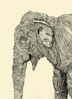 Elephant pen drawing. Sectioned hatched lines