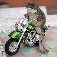 16 Frogs riding bicycles ideas | frog, frog and toad, bicycle