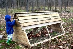 backyard chickens? yes, please