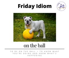 Rex is totally on the ball; every table is served and every guest is happy. Are you on the ball? What's an equivalent expression in your language? #EFL #esl #idioms #English #learnenglish #anglais #apprendreanglais #tesol #tefl #expression #elearning Equivalent Expressions, Idioms, Learn English, Esl, Language, Shit Happens, Learning, Happy, Table