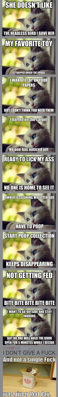 First World Cat Problems....hahahahah my children!