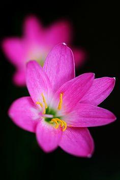 Flower Close Up #inspiration #flowers #beautiful