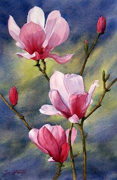"For the love of art — ufukorada: Joe Cartwright - ""Magnolias"" Watercolor Flowers, Watercolor Paintings, Flower Painting Canvas, Botanical Art, Painting Inspiration, Flower Art, Magnolia, Drawings, Ideas"