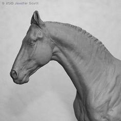 MH$P | Coming Soon! Rajah, Marwari Stallion X Scott