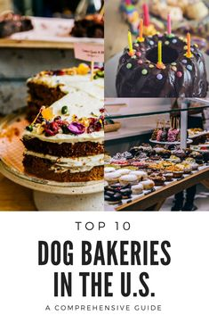 A look a Dog Bakery! A look at the top 10 Dog Bakeries that will have your pup drooling. Dog Training Methods, Basic Dog Training, Dog Training Techniques, Training Dogs, Training Online, Puppy Obedience Training, Positive Dog Training, Dog Bakery, Easiest Dogs To Train