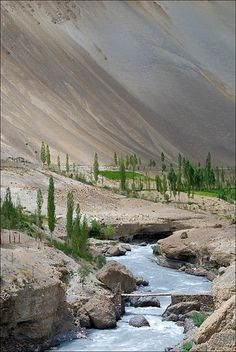 ☀Along the Yapola, barley fields and poplar trees brighten the desert mineral multicolored green soft keys. Ladakh ~ Phanjila by Anne on Flickr*