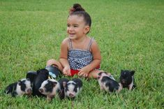 15 Teacup Piglets That Are Even Cuter Than Kittens