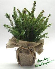 burlap herbs