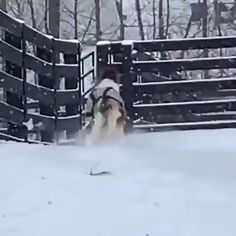 Cuteness has been outdone. Cuteness has been outdone. This is the most adorable video I've seen in years. Funny Horse Videos, Funny Horses, Cute Horses, Cute Animal Videos, Pretty Horses, Horse Love, Funny Animal Pictures, Beautiful Horses, Animals Beautiful