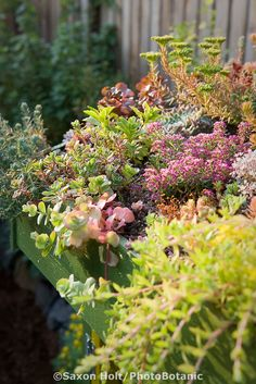 small green roof of succulents on garden shed
