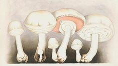 Výsledek obrázku pro Les aquarelles de Jean-Henri Fabre