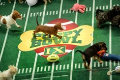 Inside the Puppy Bowl, the visionary force behind online cute