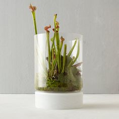 Glass Base Cylinder Terrarium