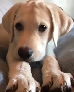 Soun on 🔊 he's so sweet 😍 cute puppy videos cute baby animals, dogs и c. Cute Funny Animals, Cute Baby Animals, Animals And Pets, Nature Animals, Wild Animals, Cute Puppy Videos, Cute Animal Videos, Dog Videos, Cute Dogs And Puppies