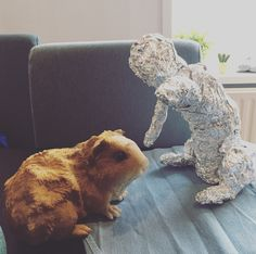 I am working on the #sculpture on the right of a kitty. He is about to bop the guinea pig because he wants to play! Along with the guinea pig statue which I bought at #Intratuin they will be placed outside. This is a birthday present