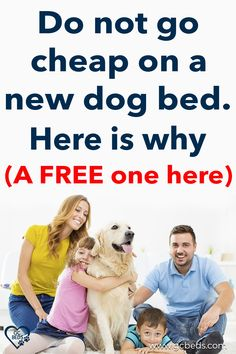 Learn what all goes into a good dog bed in order to combine comfort and value (and avoid probmls with smells or even sickness) and enter the context to win one for free Largest Great Dane, Personalized Dog Beds, Cute Dog Beds, Indestructable Dog Bed, Dog Rooms, Mistakes, Your Dog, Room Ideas, Good Things
