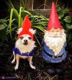 Garden Gnome Costume - Halloween Costume Contest via Amy: Chula is 15 years old, and will pose for pictures wearing costumes. She is patient and makes a great model. Chihuahua Halloween Costumes, Family Halloween Costumes, Halloween Fancy Dress, Christmas Costumes, Halloween Kostüm, Garden Gnome Halloween Costume, Baby Gnome Costume, Halloween Costume Contest, Cute Costumes
