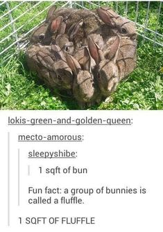 Top 22 Funny Pics & Memes Today Must Watch Funny Animal Memes, Cute Funny Animals, Cute Baby Animals, Funny Cute, Haha Funny, Really Funny, Animals And Pets, Funny Stuff, Random Stuff