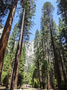 Parki Narodowe USA, które warto odwiedzić. - Milky Route 66, Mount Rainier, San Francisco, Mountains, Plants, Travel, Viajes, Plant, Trips