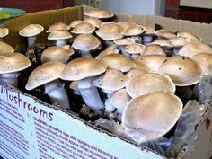787 Best mushrooms images in 2019 | Stuffed mushrooms