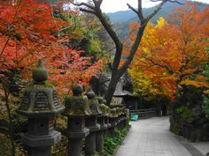 Tokyo, Kasım ortası – Aralık başı arasında büründüğü kızıl, sarı, turuncu, yeşil renkli yapraklar ile muhteşem bir renk senfonisi sunuyor.