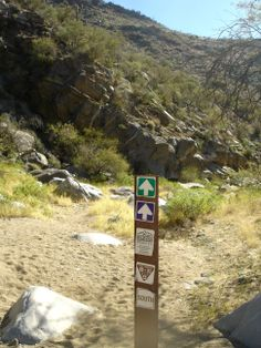 Followed the Wild Burro track back along the sandy wash.  Alamo Springs and Wild Burro Hike, Marana, AZ.