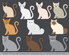 Cat Clip Art, images of short hairs, devon, sphinx, siamese, persian, maine coon, ragdoll, abyssinian. Perfect for cat lover projects. #cats #kittys #clipart #siamese #persian #sphynx #mainecoon #ragdoll #shorthairs #catimages