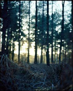 Film Photo By: Photom  Mamiya RZ67, Kodak Ektar 100