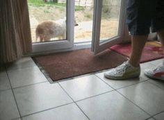 Leute, es geht wirklich nichts über saubere Pfoten... Echt jetzt! ;-) www.tierischer-urlaub.com #urlaubmithund #urlaubmithaustier #hundefreundlich #hunde by media.giphy.com Urlaub mit Hund, Katze & Co - www.tierischer-Urlaub.com – Google+