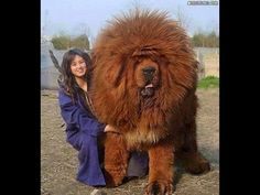 10 Biggest Animals Ever Seen - more at megacutie.co.uk