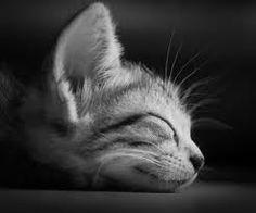 Kitty Kaat (: