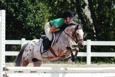 quartor horse starstable   ... hunters jumpers and western horse sales summer camps and horse shows